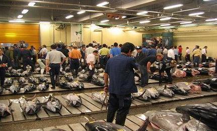 Bluefin Tuna Sells for $396,000