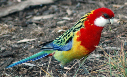 15 Incredibly Beautiful Birds | Care2 Healthy Living