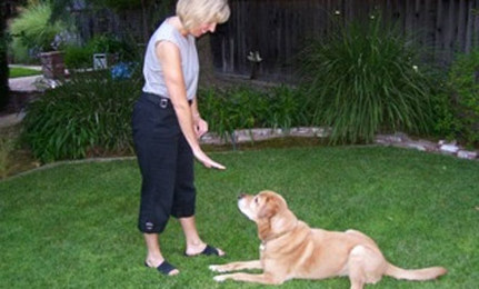 Is Dog Training an Animal Welfare Issue?