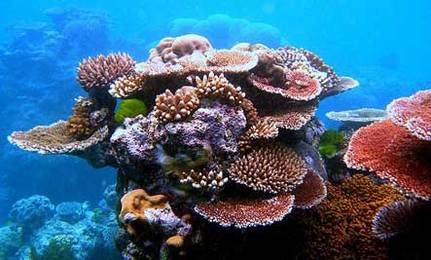 75% of Earth's Coral Reefs Threatened