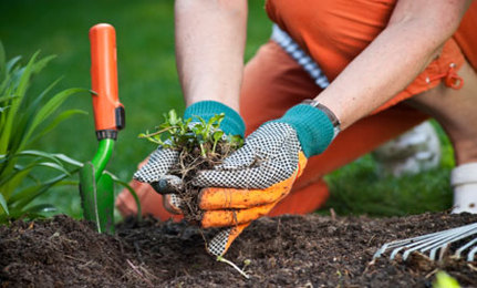 Nice Spring Garden Tips To Wake Up The Garden