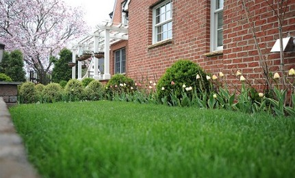 5 Quick Tips for Spring Lawn Care