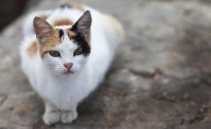 Help Japan's Animals