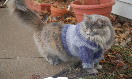 Cats In Sweaters Cat Hoodie Knitting Pattern Care2 Healthy Living