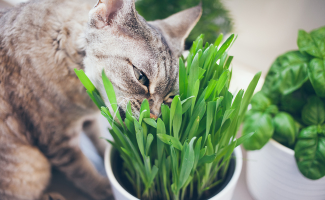 5 Human Foods Cats Can Eat Care2 Healthy Living