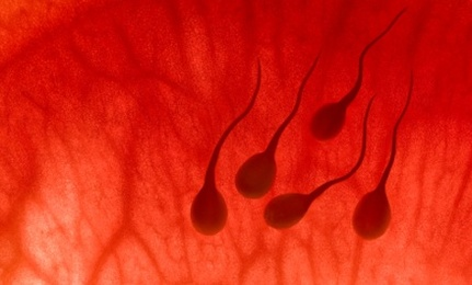 Declining Sperm and The New York Times