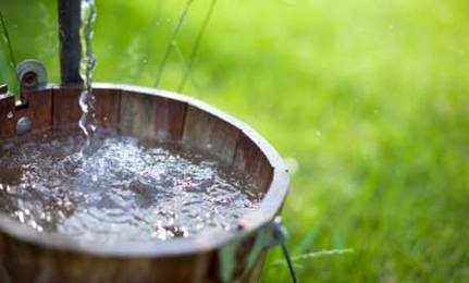 5 Ways to Collect Water for Your Garden
