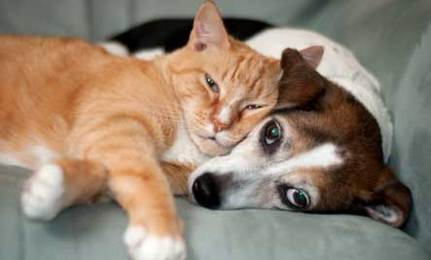 10 Tips For Bringing Cats \u0026 Dogs Together