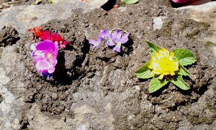 Mud: Nature's Soul-Salve