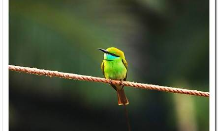 Angels Among Us: The Green Bird