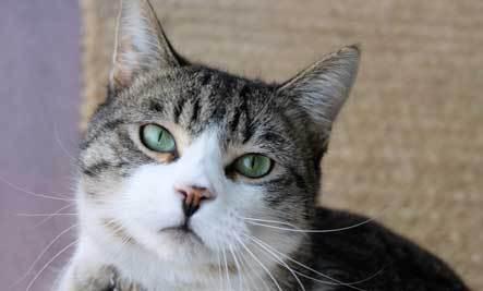 Feline Love Bites: A Love Affair with Cats