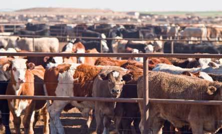 Meat Industry & Global Warming: What's the Link?