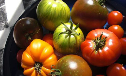 Why Backyard Tomatoes Taste So Delicious