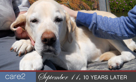 In Memory of a Remarkable Guide Dog