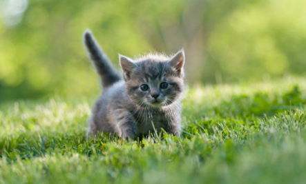 10 Tips for New Cat Owners