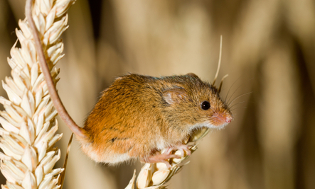 5 Humane Ways To Get Rid Of Mice | Care2 Healthy Living
