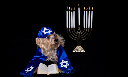 The Jewish New Year with 'GOD' Spelled Backwards