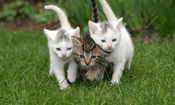 Cat Behavior 101 (Slideshow)