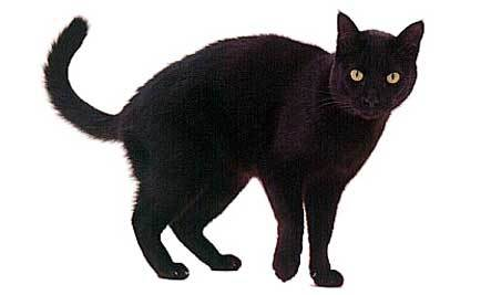 Black Cats Good Luck Or Bad Luck Care2 Healthy Living