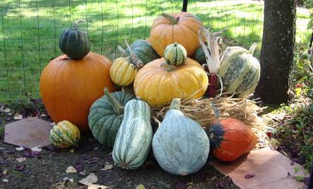 Pumpkins: Healing Decorations