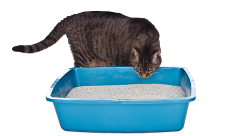Top 10 Ways to Help Cats that Don't Like the Litter Box