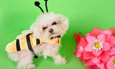 Animals in Costumes: Cute or Cruel?