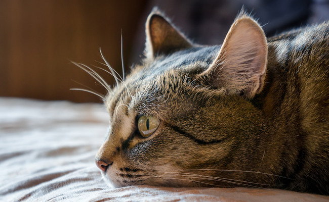 Top 10 Signs of Cancer in Dogs and Cats