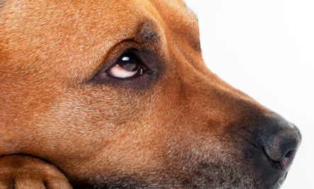 Dog Gets Death Sentence for Injuring a Cat