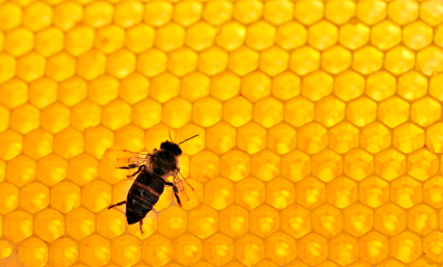 The Collapse of Honey Bees