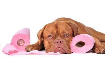 Embarrassing Secrets of Pet Parents