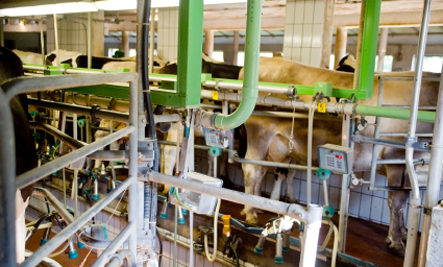 3 Ways Factory Farms Contribute to Air Pollution