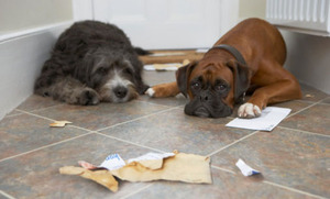 Vets Share Worst Things Their Pet Patients Ate