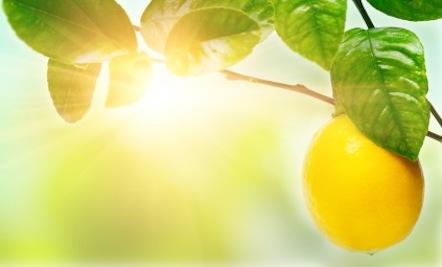 A Happy Healthy Lemony Good Morning Care2 Healthy Living