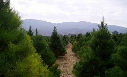 4 Simple Ideas For A Sustainable Holiday Season