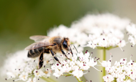 What's Causing Colony Collapse Disorder?