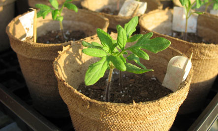 6 Tips for Starting Your Own Vegetable Seeds Indoors