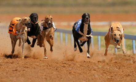 Skechers Glamorizes Greyhound Racing in Superbowl Ad