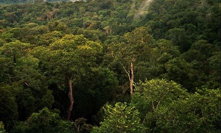 Conserving Nature Worth $500 Billion to Poor?