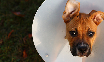 9 Myths About Spaying and Neutering