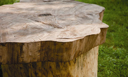 Large Tree Stump Coffee Table Table Out of a Tree Stump