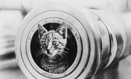 5 Famous Cats of War