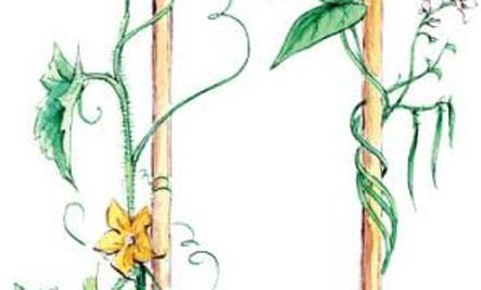 Use Simple Trellises to Grow More Food