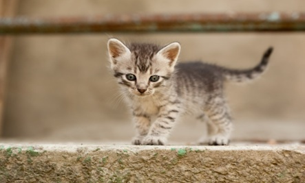 Baby kittens pictures