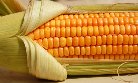 Walmart to Sell Monsanto GMO Corn This Summer