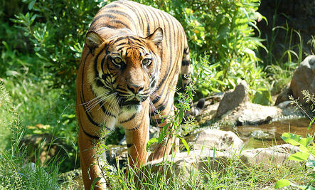Tigers Removed from Tarzan Actor's Home