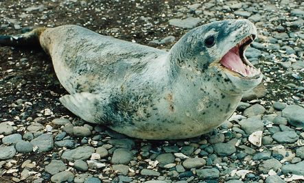 Dolphins, and Seals Would Suffer from Budget Cuts