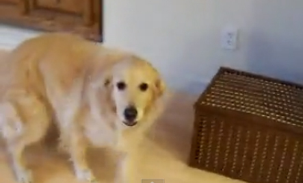 Funny Helpful Dog (Video)