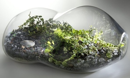 Micro Gardens: Create Your Own Terrarium