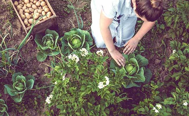 Growing an Edible Garden