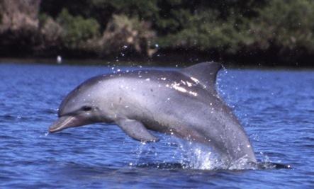 Captive Dolphin Will Go Free